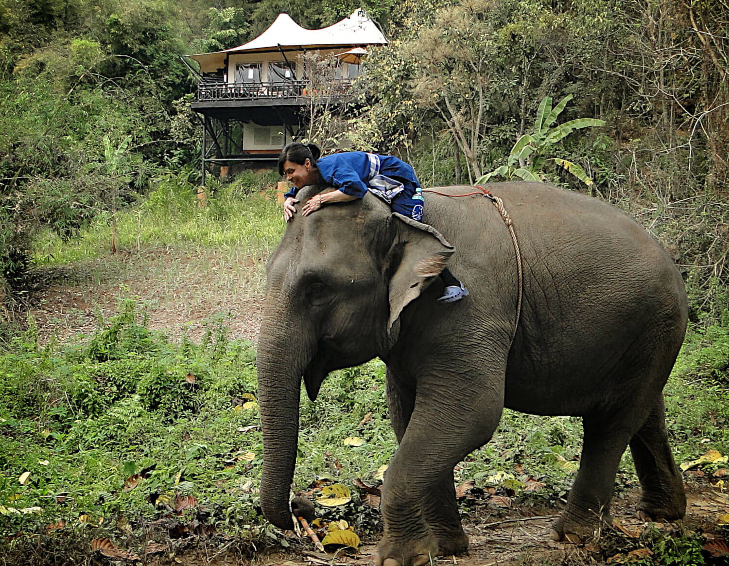lady on elephant